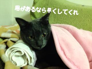 image-20140210231638.png